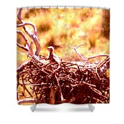 A Eaglet In Down Shower Curtain