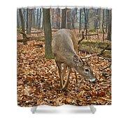 A Eight Point Buck 1261 Shower Curtain
