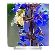 A European Honey Bee And It's Flowers Shower Curtain