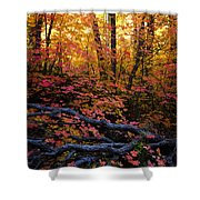 A Fall Forest  Shower Curtain