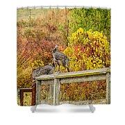 A Fall Photo Shower Curtain