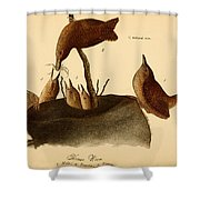A Family Of House Wrens Shower Curtain
