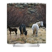 A Family Of Three - Wild Horses - Green Mountain - Wyoming Shower Curtain