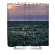 A Female Cheetah, Acinonyx Jubatus Shower Curtain
