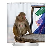 A Female Macaque On Top Of Wall Shower Curtain
