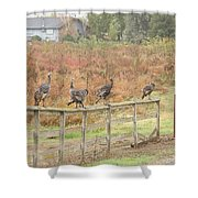 A Fence Line Of Fall Turkeys Shower Curtain