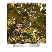 A Few Grapes Left For The Birds Shower Curtain