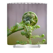 A Fiddlehead Abstract Shower Curtain