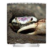 A Fiddler Crab Around Hilton Head Island Shower Curtain