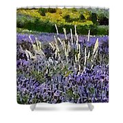 A Field Of Lavender Shower Curtain