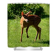 A Fine Little Fawn Shower Curtain by Lori Tambakis
