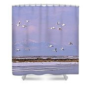 A Flock Of Swans Flies Over Water Shower Curtain