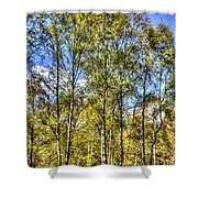A Forest Glade Shower Curtain