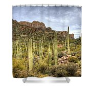 A Forest Of Saguaros  Shower Curtain