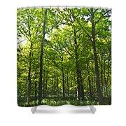 A Forest Walk Shower Curtain