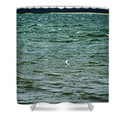 A Forster Tern Fighting The Winds Out At Sea Shower Curtain