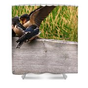 A Fourth Baby Barn Swallow Wants In On Lunch Shower Curtain