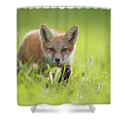 A Fox In The Grass  Montreal, Quebec Shower Curtain