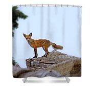 A Fox On The Rocks Shower Curtain