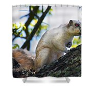 A Fox Squirrel Pauses Shower Curtain