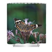 A Friendly Butterfly Smile Shower Curtain