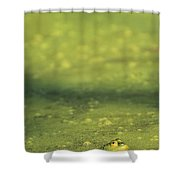 A Frog In Pond Muck Shower Curtain