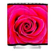 A Fuschia Pink Rose Shower Curtain