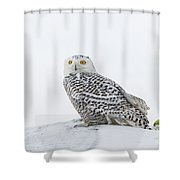 A Game Of Fetch Shower Curtain