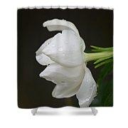 A Gardenia Profile Shower Curtain