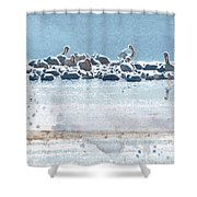 A Gathering Of Pelicans Shower Curtain