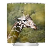 A Gentle Giant Shower Curtain by Lori Tambakis