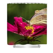 A Georgous Butterfly Macrophotography Shower Curtain