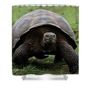 A Giant Tortoise Walks Along The Rim Shower Curtain