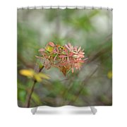 A Glimpse Of Spring To Come Shower Curtain