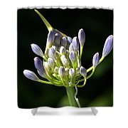 A Glow On Agapanthus Shower Curtain