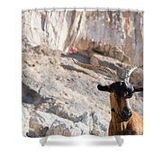A Goat Hanging Out At The Base Shower Curtain