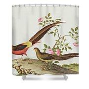 A Golden Pheasant Shower Curtain
