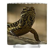 A Golden Skink Shower Curtain