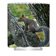A Gray Squirrel Pose  Shower Curtain