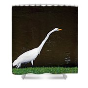 A Great Egret On Hilton Head Island Shower Curtain