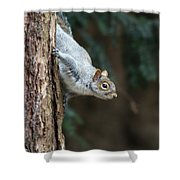 A Grey Squirrel Making It S Way Shower Curtain