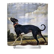 A Greyhound Lurking Shower Curtain