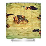 A Group Of Hippos In A River. Tanzania Shower Curtain