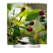 A Group Of Red Tree Flowers Shower Curtain