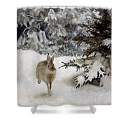 A Hare In The Snow Shower Curtain