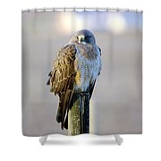 A Hawk On A Fence Post  Shower Curtain