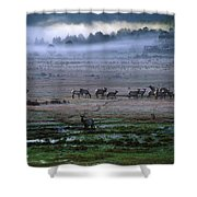 A Heard Of Elk Graze In A Misty Meadow Shower Curtain