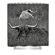 A Highland Cattle In The Scottish Highlands Shower Curtain