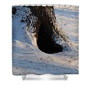 A Hollow In A Tree In Winter Shower Curtain