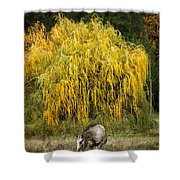 A Horse And A Willow Tree Shower Curtain